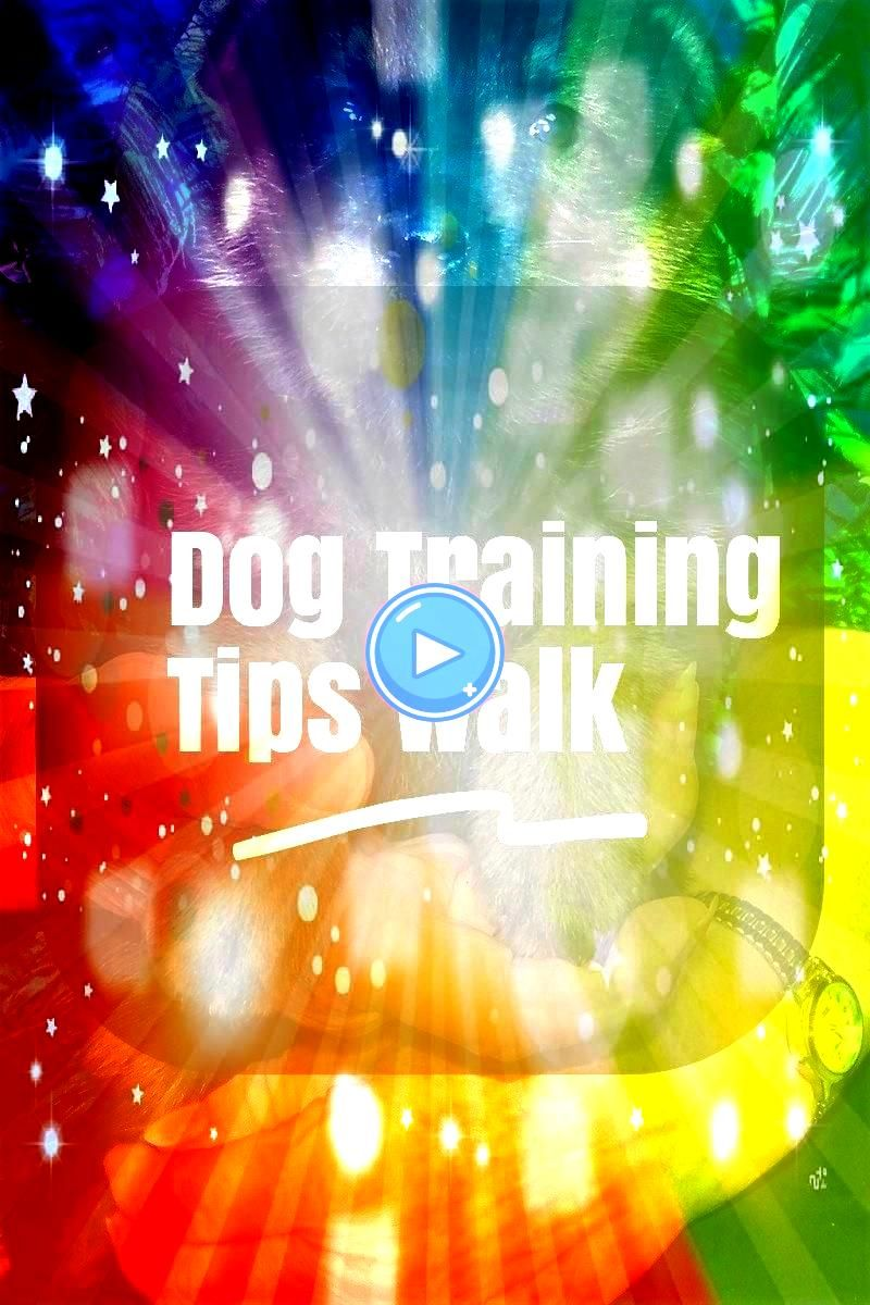 Training Tips Walks Suggestions For Owner  Want to know more   Learn A Few Dog Training Tips Walks Suggestions For Owner  Want to know more   Learn A Few Dog Training Tip...