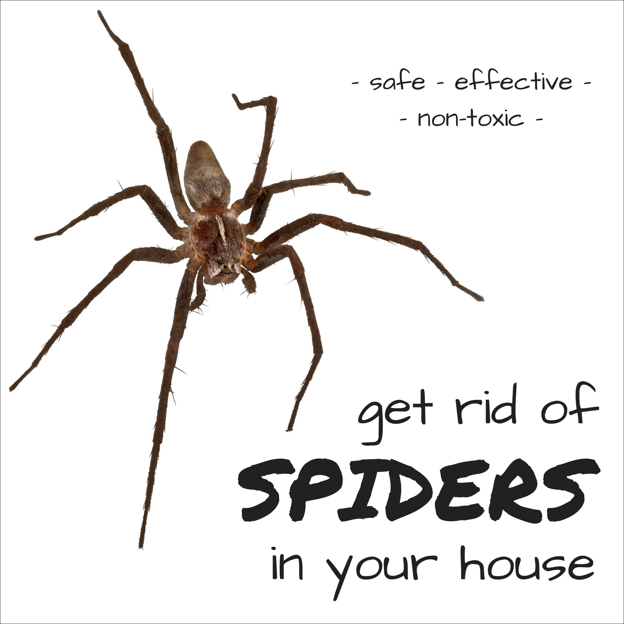 How Do You Get Rid Of Spiders In Your Basement Get rid