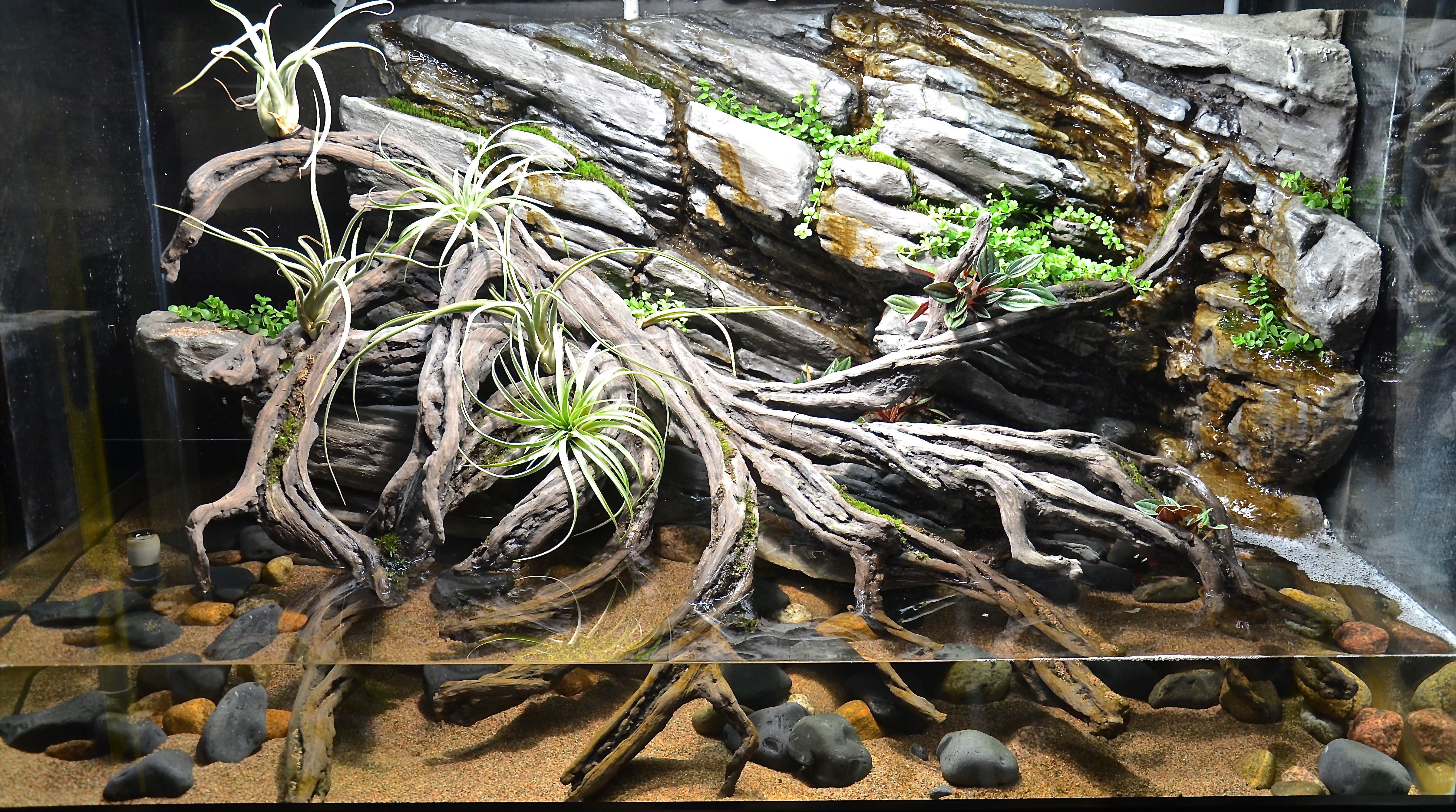 Paludarium 560 l 140 gal diy rock and roots planethx paludarium 560 l 140 gal diy rock and roots fandeluxe Ebook collections