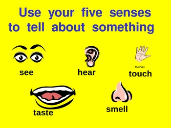 five senses powerpoint for kindergarten kindergarten social