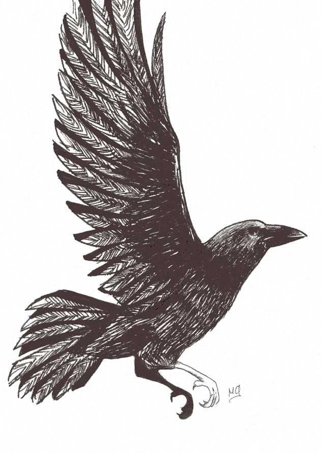 Crow in Flight. from Deviant Art.