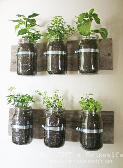 Mason jar planters, potential for my herbs close by!