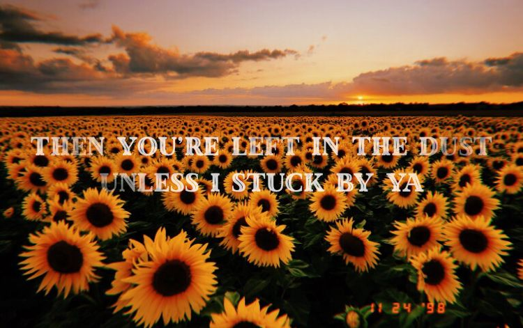 Sunflower Song Lyrics Wallpaper Music Is Life Post Malone
