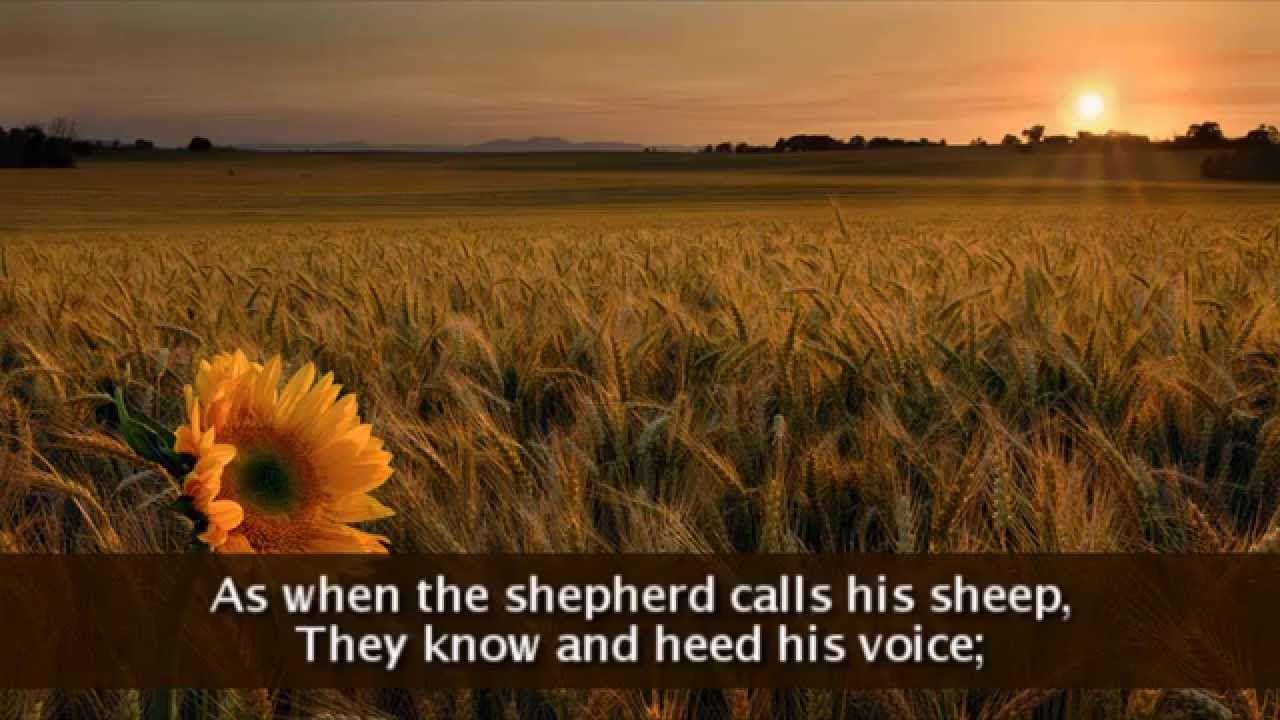 Gift of finest wheat lyrics lyrics god is good wheat