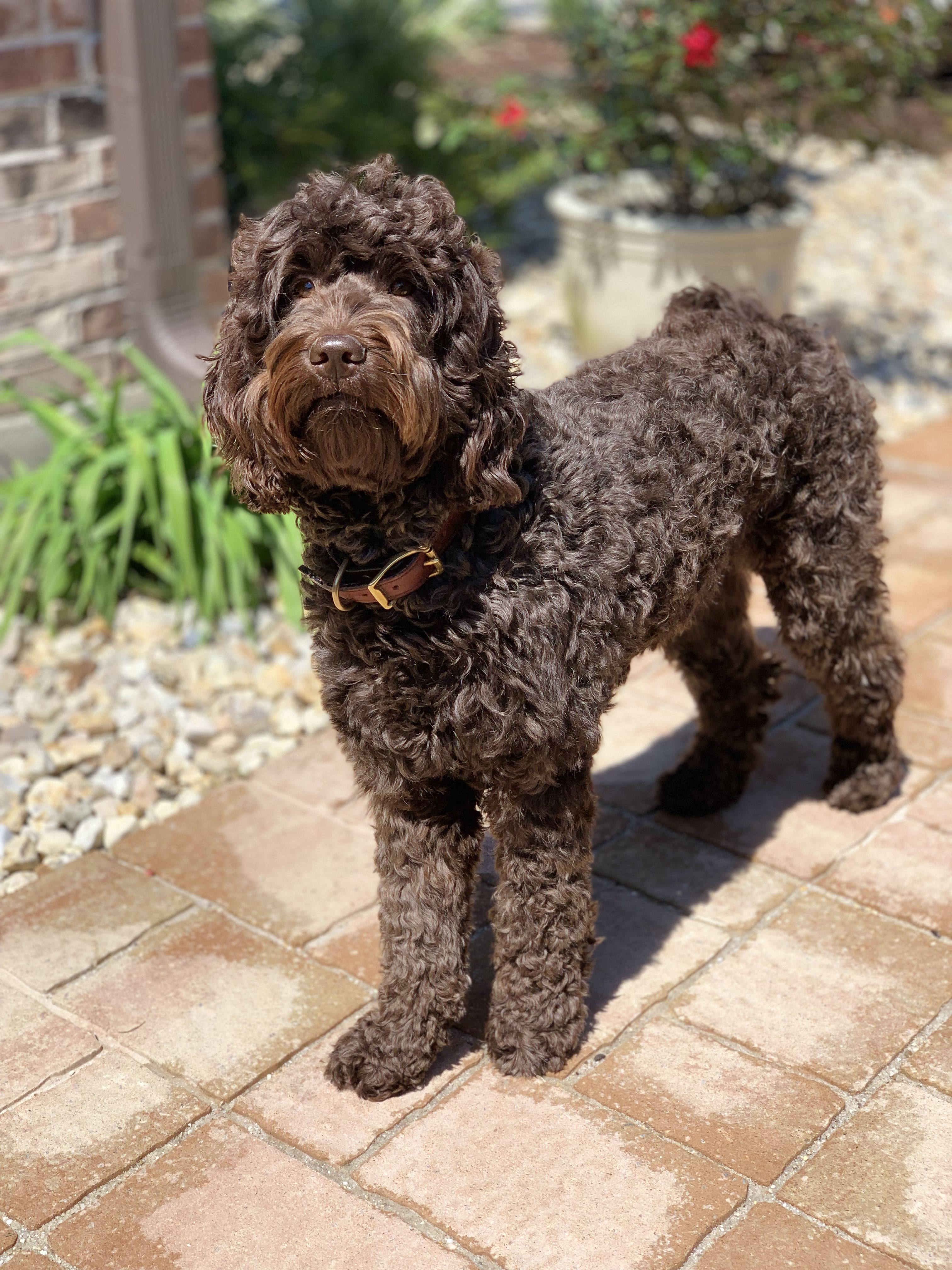 Pin By Doodle Doods On Australian Labradoodle