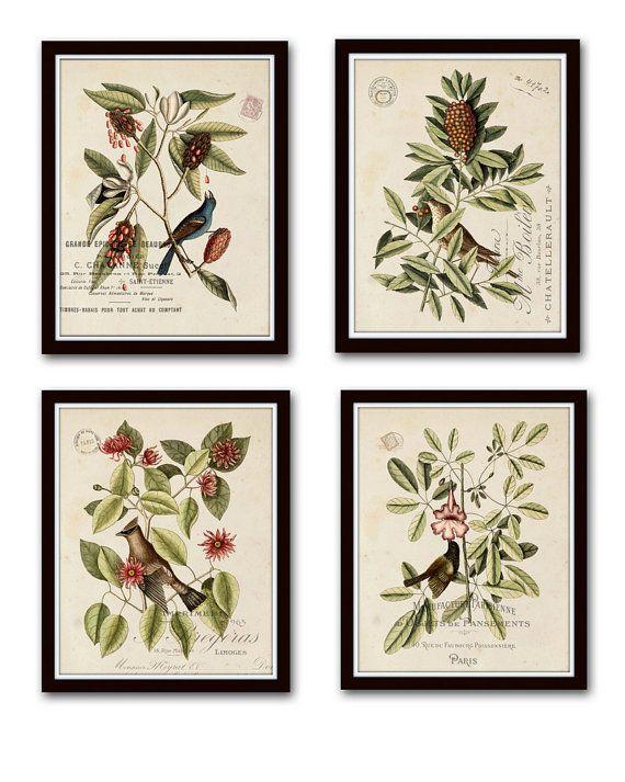 Pin On Botanical Prints