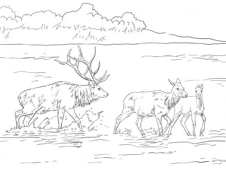 elk coloring page Rocky Mountain Elk coloring page Super