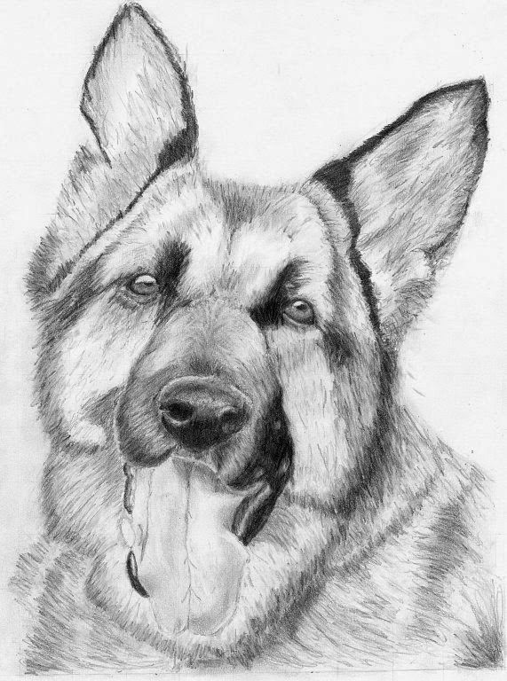 dibujosderosasalapiz15172jpg 571768  DIBUJO Y PINTURA