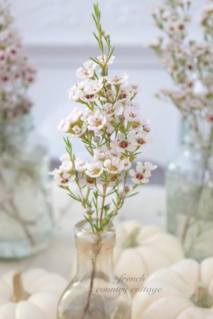 Wax flowers for the tables girly stuff pinterest wax flowers wax flowers for the tables mightylinksfo