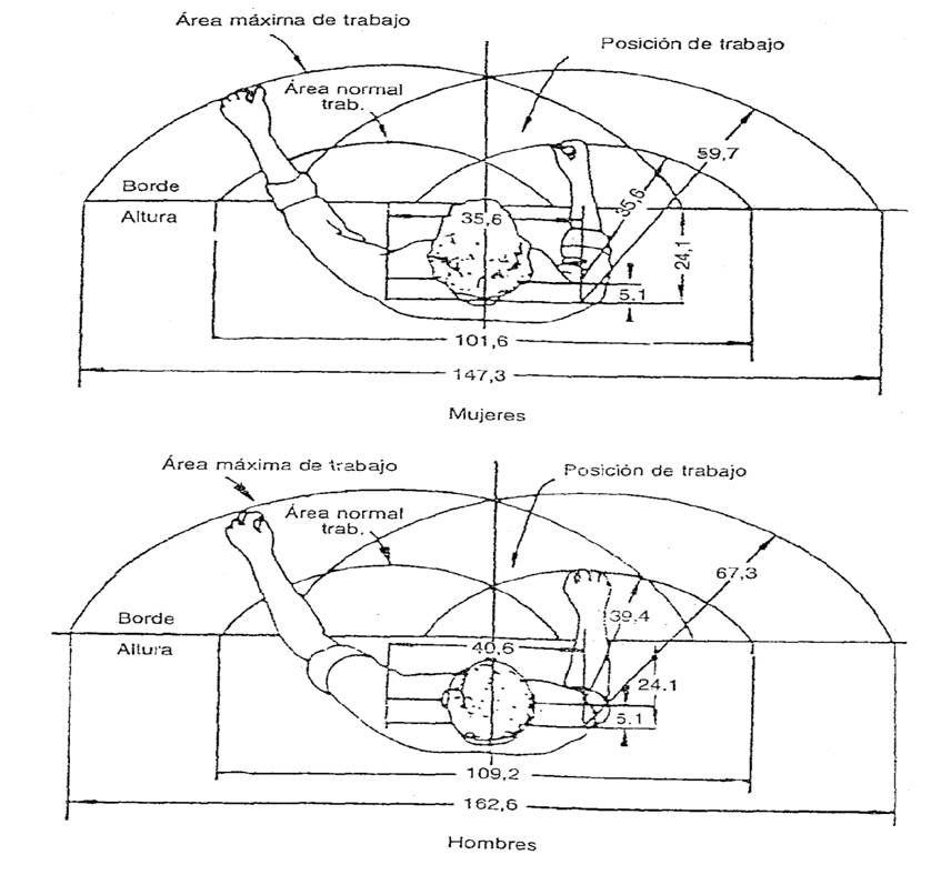Lecci n 9 puestos y espacios de trabajo arquitectura for Espacio de trabajo ergonomia