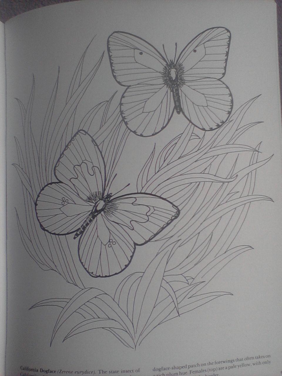 Pin By Uma Vairavan On Drawing Maple Leaf Tattoo Sketch Book