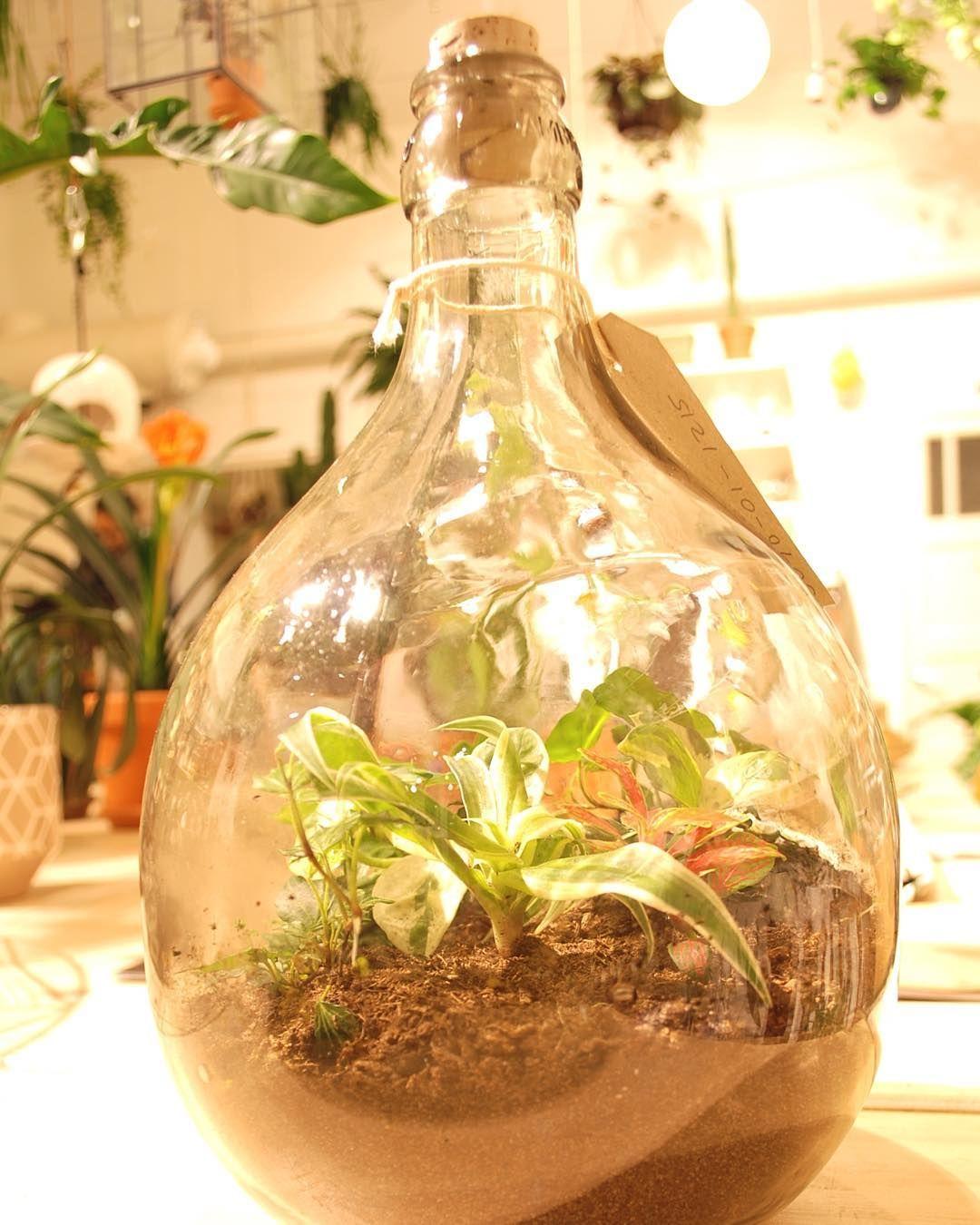 Garden In A Bottle From Flessengroen