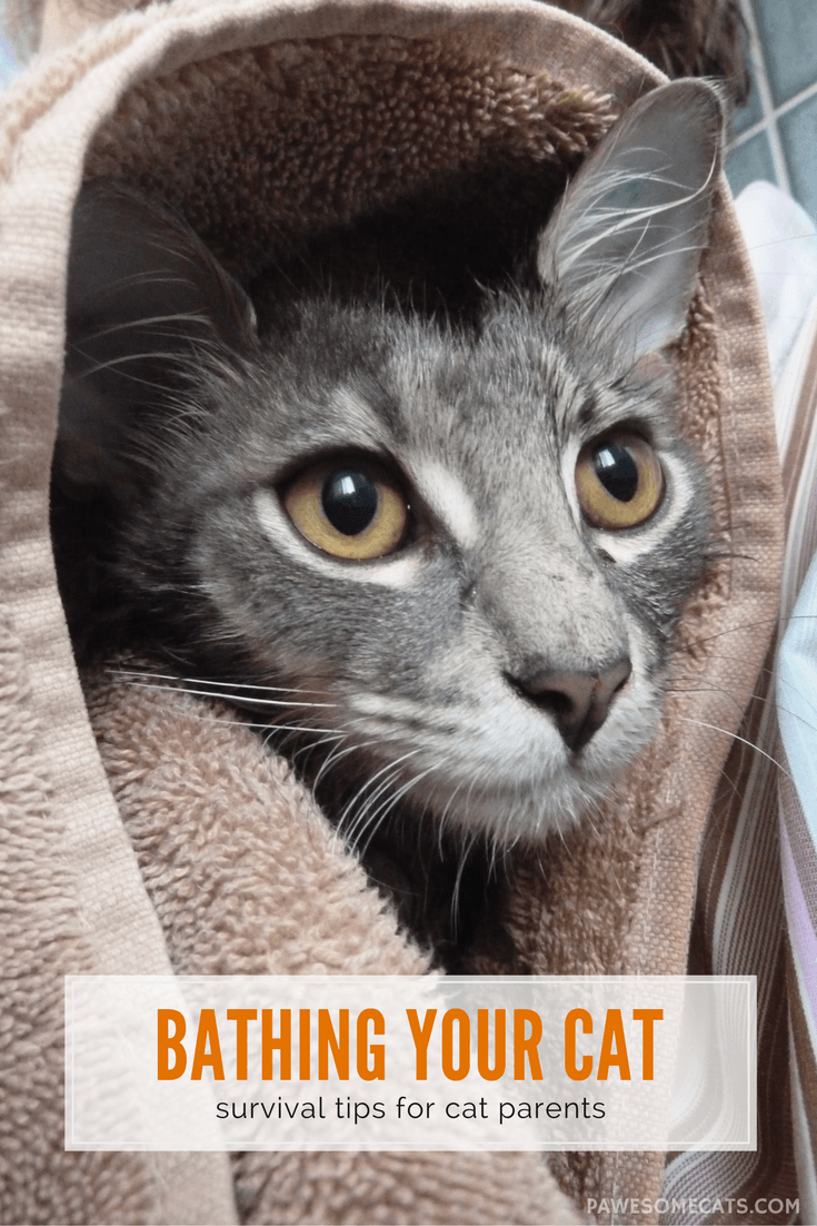 How to Survive Bathing Your Cat Cool cats, Cat behavior