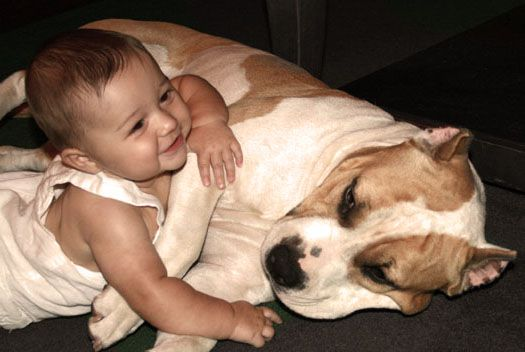 Pit Bull & Baby