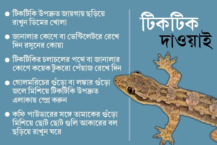 Few lesser known homely ways to get rid of lizard dgtl