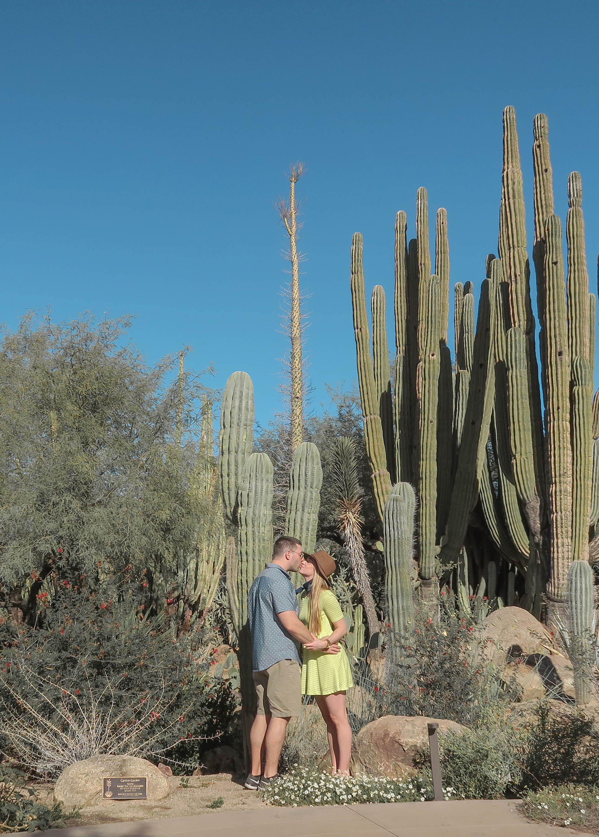 The Desert Botanical Gardens In Phoenix Are Amazing. Spend A Few Hours Here  Seeing The Botanical Plants. Be Sure To Get Your Free Ticket From The  Library!