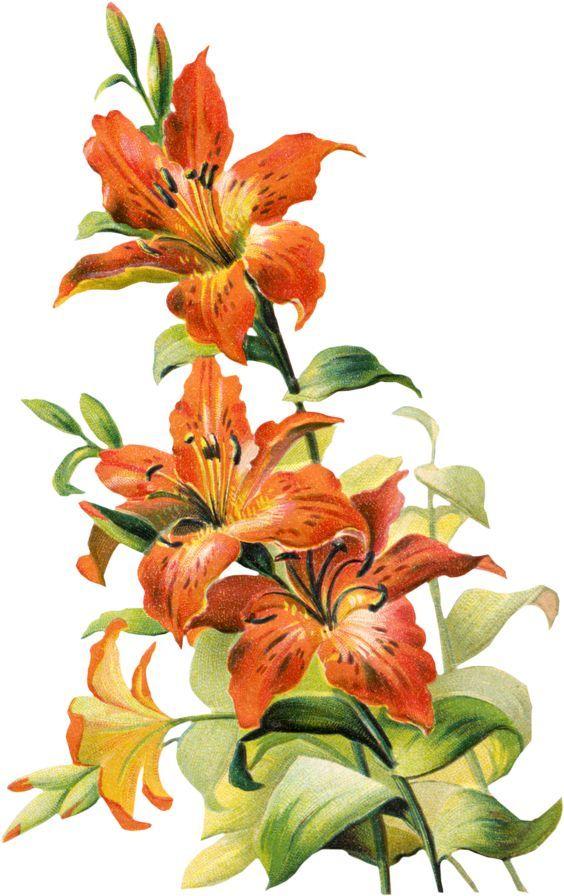 Настю открытка, открытки рисованные с лилиями