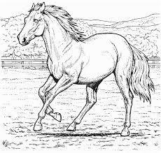 Bildergebnis Für Pferdebilder Arte Pinterest Ausmalen