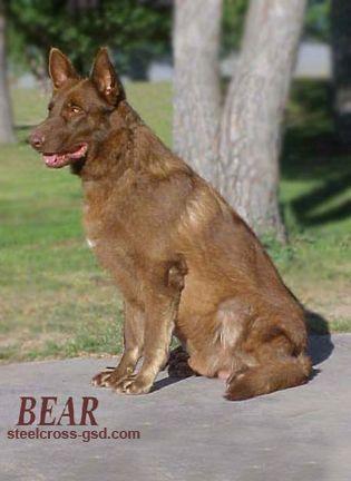 Steel Cross German Shepherd Dogs