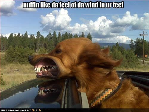 wind in your teeth