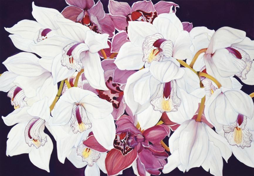 Helen Lucas Orchid Paintings