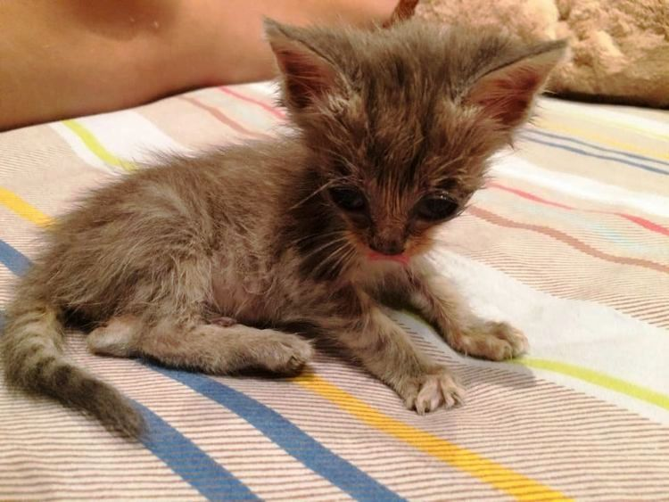 Ants Were Crawling And Biting His Skin And It Could Barely Keep His Eyes Open Cat Post Tiny Kitten Kitten