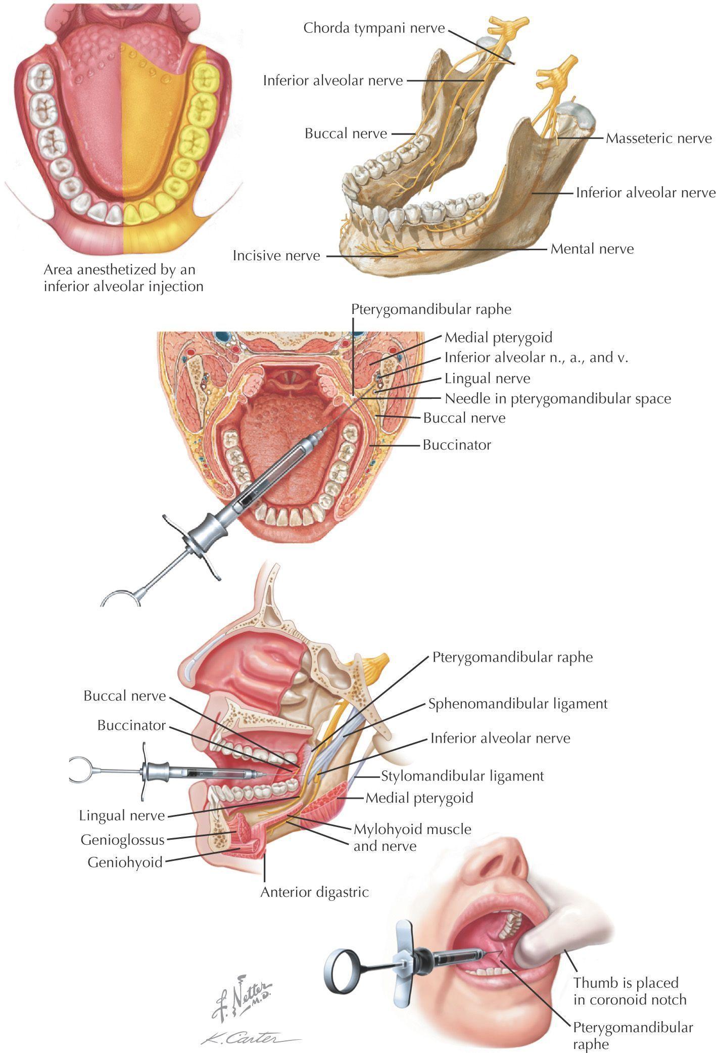 Nifty Dental Surgery Food Life #OralcarePro #DentalSurgeryLogo #dentalfacts