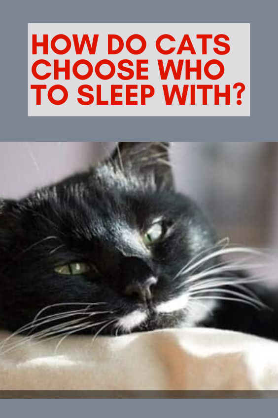 How Do Cats Choose Who to Sleep With? Cats, black cat