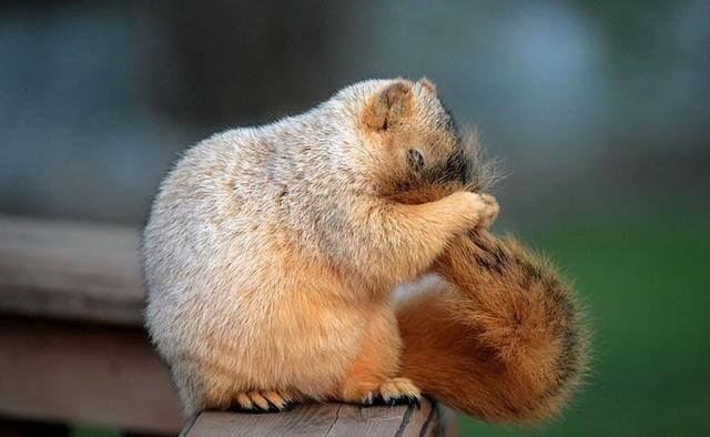 Shy squirrel ))