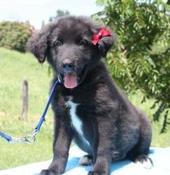 Adopt Princess S Puppies On Adoptable Pets Princess Puppies