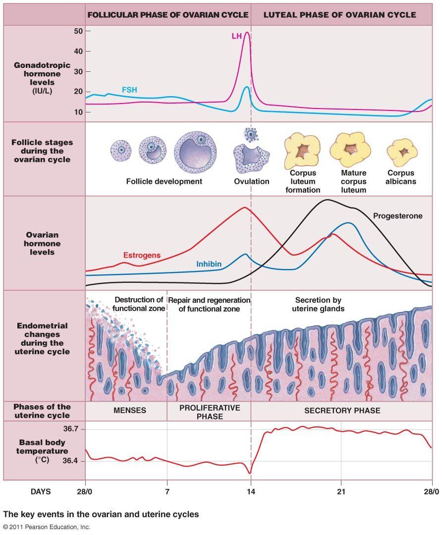 Pin by Nathan Stumpf on MCAT Bio | Physiology, Biology ...
