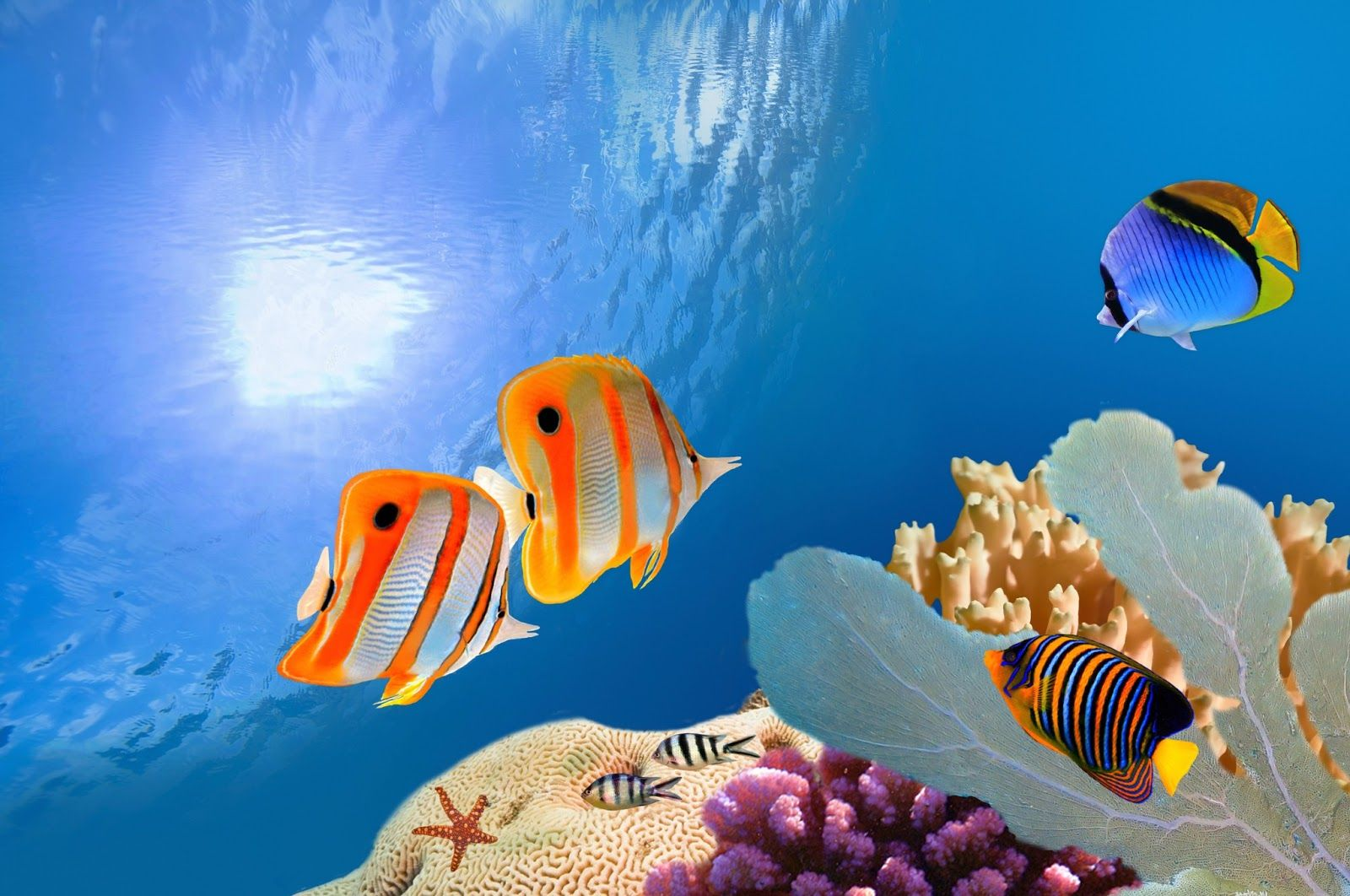 Paisajes marinos con peces small paradise pinterest for Peces de acuario marino