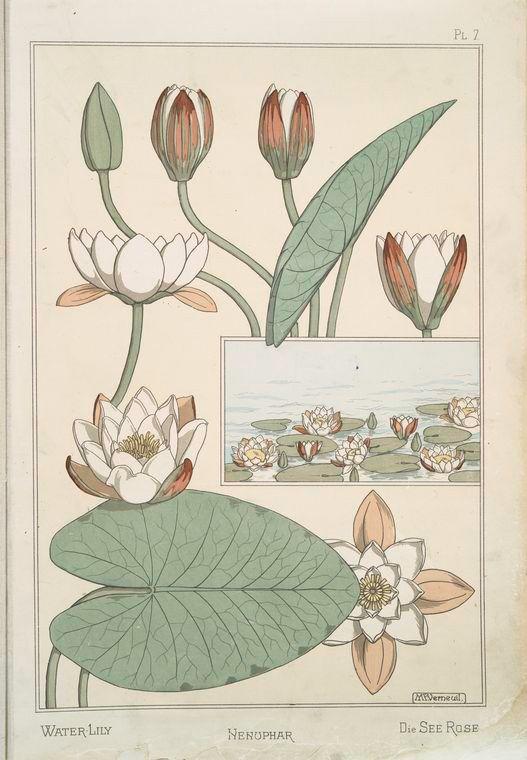 Nénuphar - Creator(s): Grasset, Eugène, 1841-1917 -- Compiler Verneuil, M. P. (Maurice Pillard), 1869- -- Artist