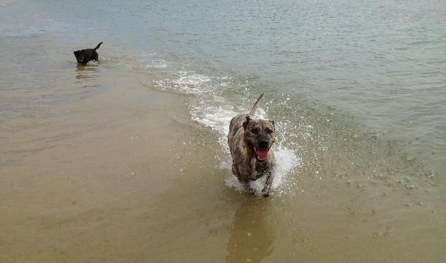 Beach Cottage Plus Two Hairy Hounds For 3 Weeks House Sitter Needed Safety Bay Rockingham Perth Wa Australia Dec 22 House Sitter Sitter Little Black Dog