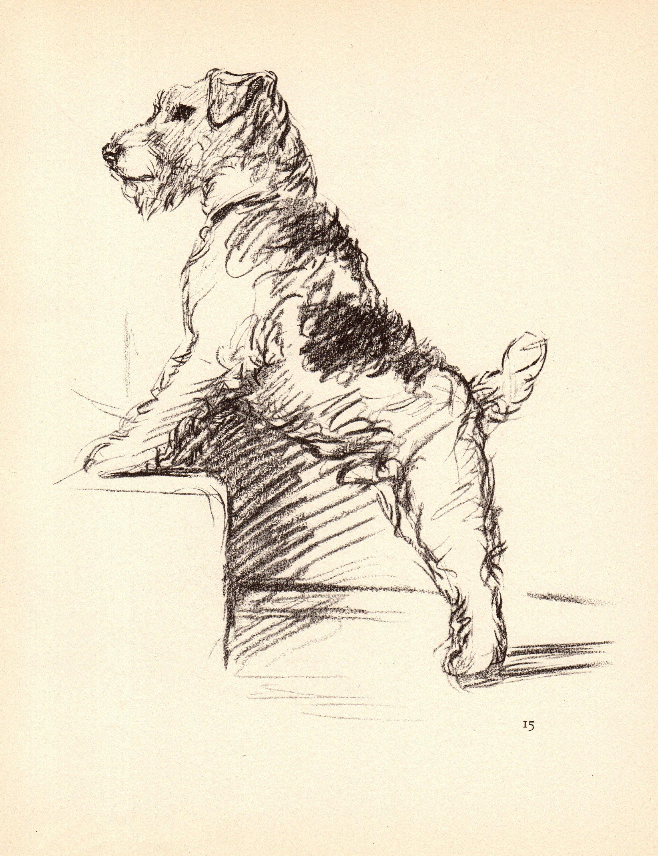 MATTED Dog Print Lucy Dawson NEW Fox Terrier