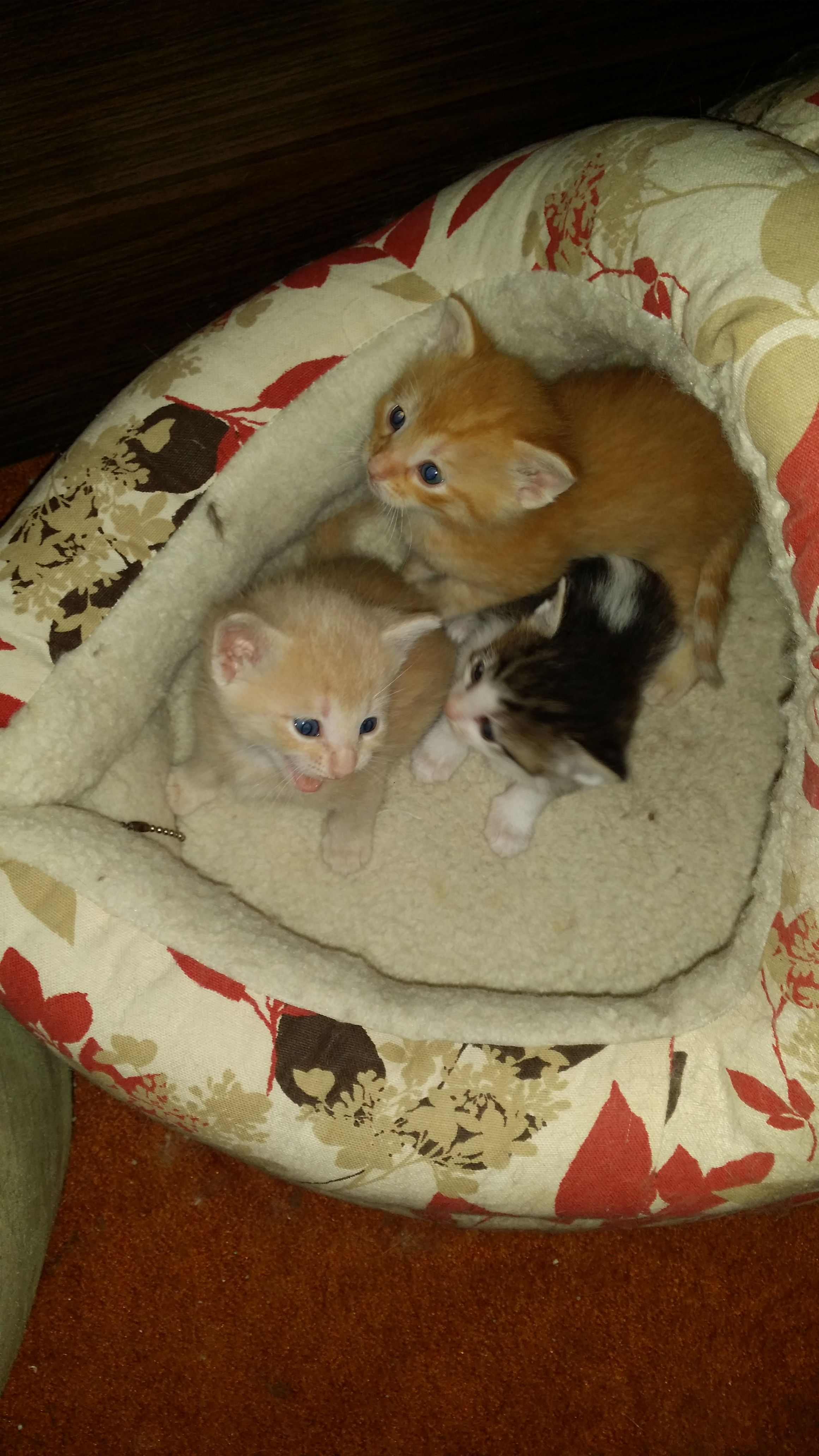 How To Treat Your Cats Diarrhea Kittens Pets Cats