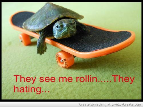 Pin By Hannah Phillips On Tickle My Funny Bone Turtle Turtles Funny Turtle Quotes