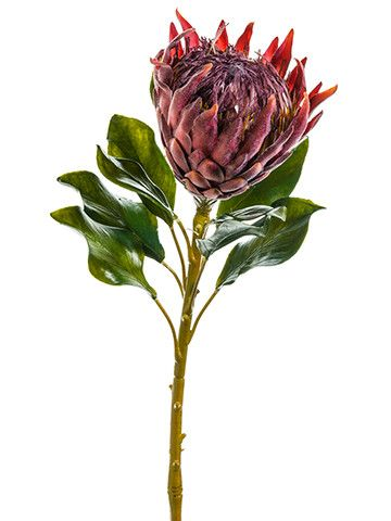 """Artificial Large King Protea Flower in Burgundy 27"""" Tall - VALUE"""