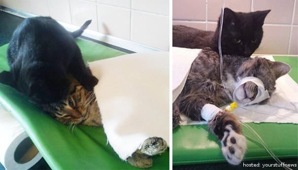 Meet The Amazing Cat From Poland That Takes Care Of Sick Animals Nurse Cat Animal Shelter Sick Cat