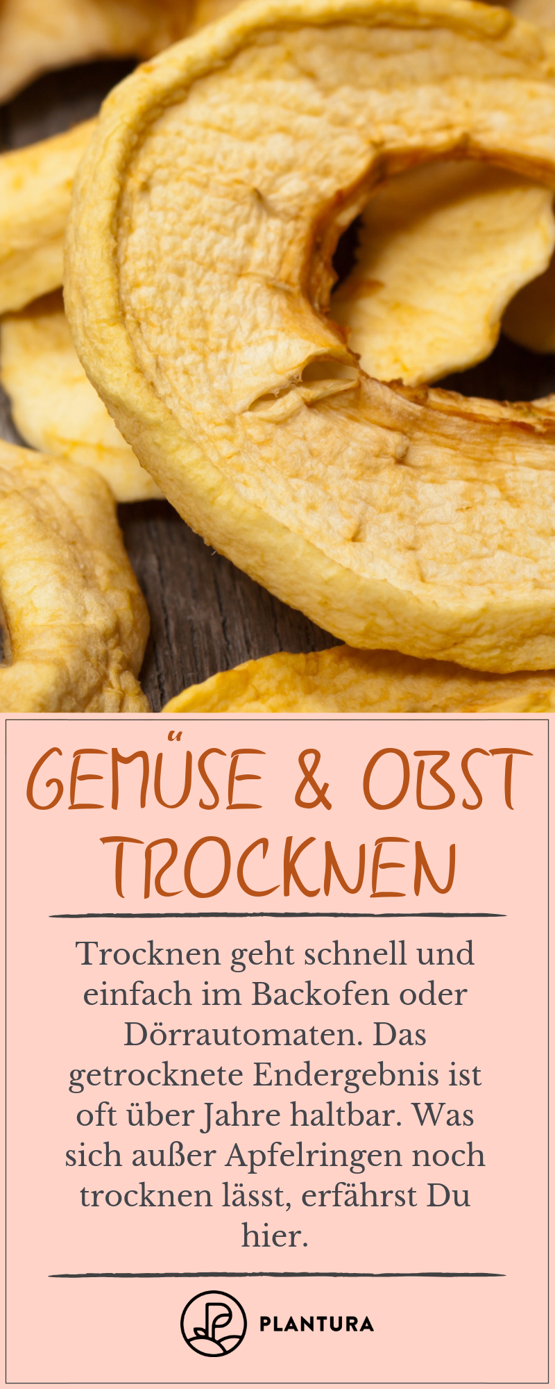 Photo of Gemüse und Obst konservieren: Einmachen, einfrieren, trocknen & Co. – Plantura