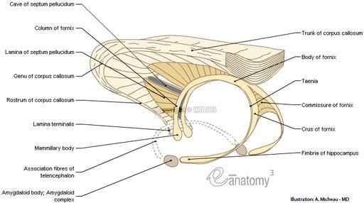 Pin By Angie Kight On Medical Anatomy Pinterest Anatomy Corpus