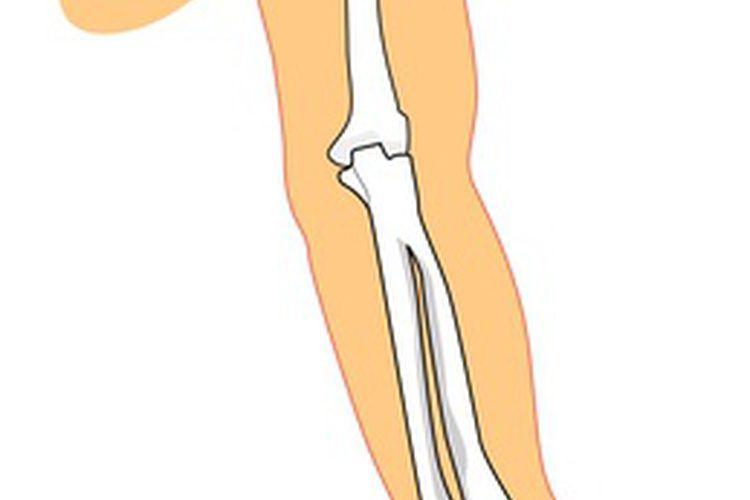 Huesos de la articulación del codo. El codo es una articulación de ...