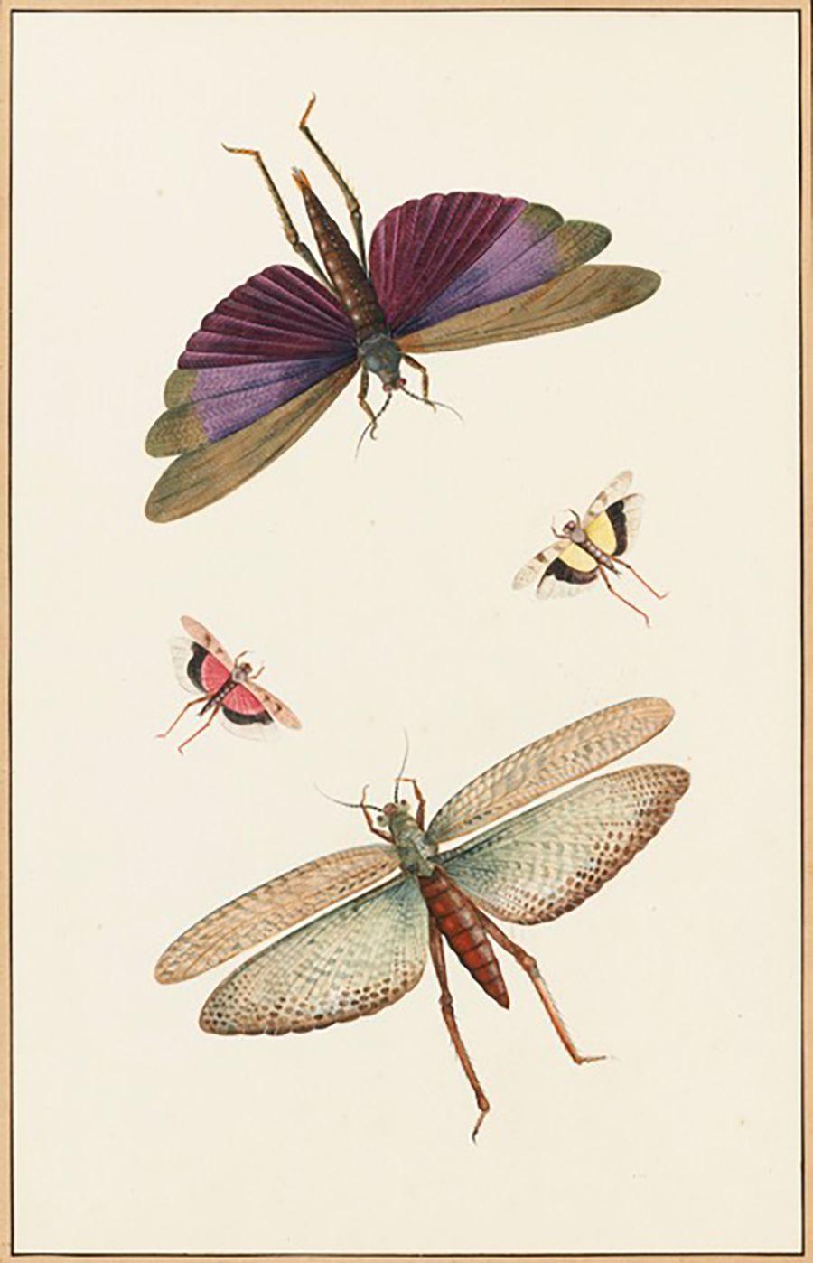 iridescences les couleurs physiques des insectes