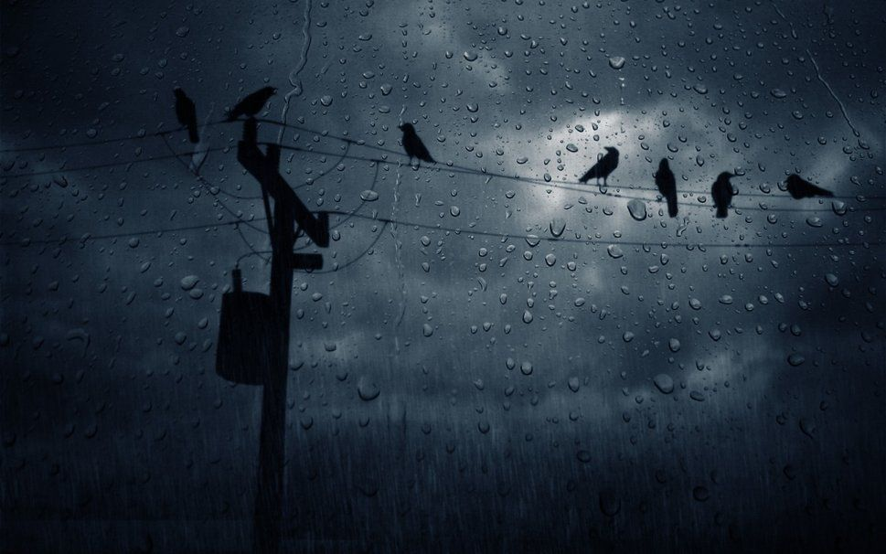 chuva de pássaros Vetor