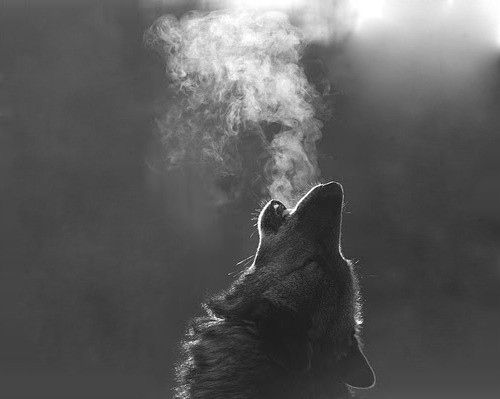 animal, black and white, dog, smoke, wolf