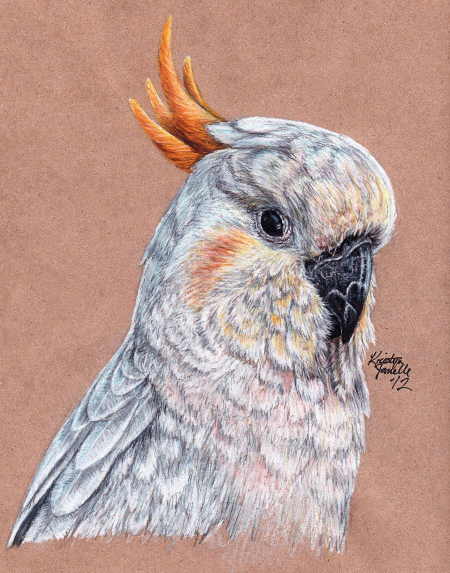 Sulphur-Crested Cockatoo by KristynJanelle.de…