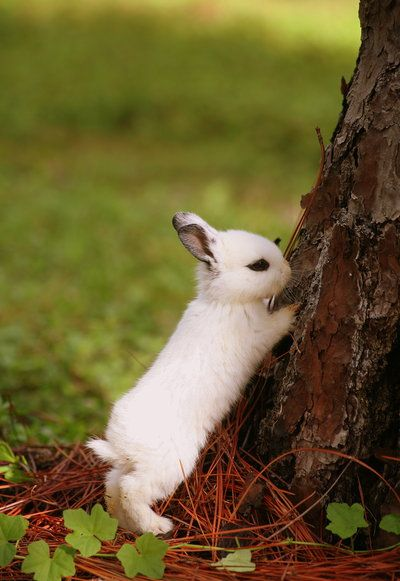 I need some white bunnies with black fur around their eyes in my garden. | bunnies with eyeliner