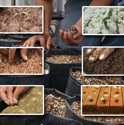 Como Nestras Plantas Murieron Nunca Crecieron Volvimos A Hacer