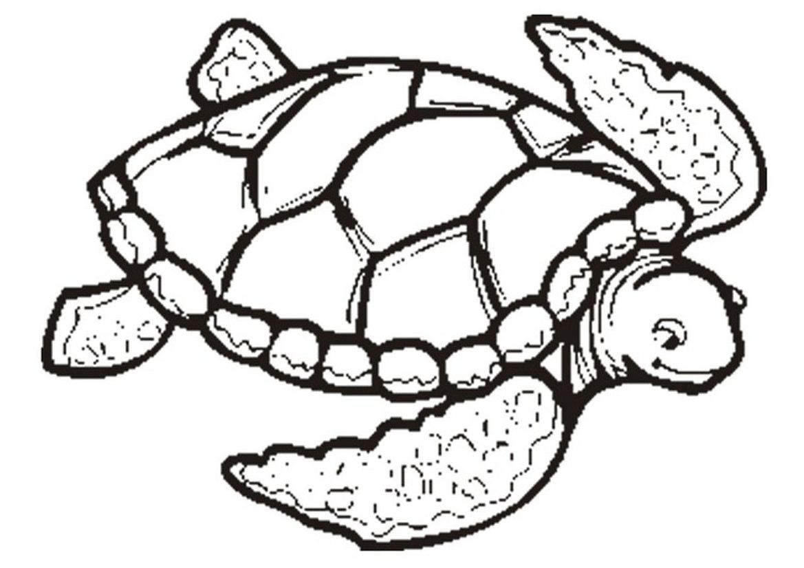 Coloring Page Turtle Turtle Coloring Pages Turtle Drawing Animal Coloring Pages