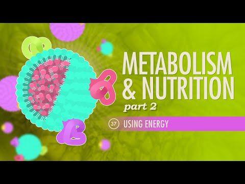 Metabolism Nutrition Part 2 Includes Diabetescrash Course Ap
